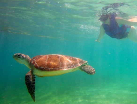 Mexiko - Reiseblogger Anja Beckmann schwimmt mit Schildkröten