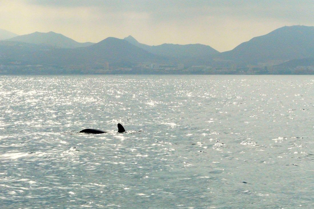 Walbeobachtung auf Teneriffa