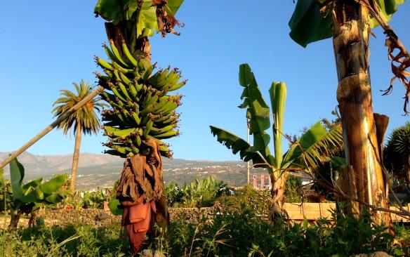 Casa Rural Patio de Tita auf Teneriffa