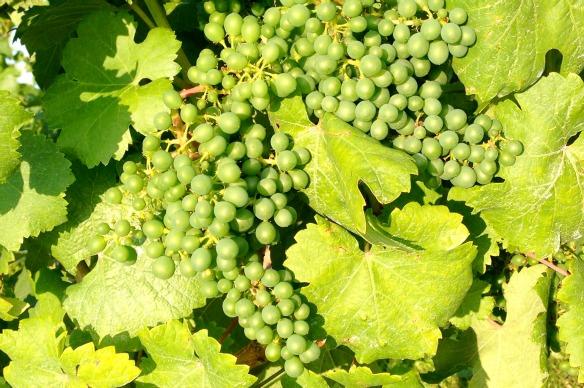 Wein beim Loisium in Langenlois