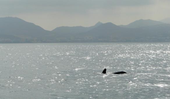 Walbeobachtung bei Teneriffa