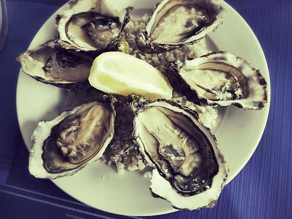 Austern in Charente-Maritime