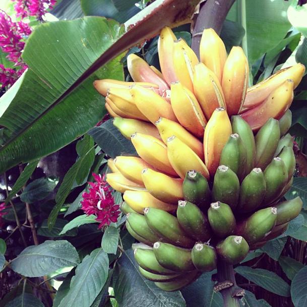 Von La Gomera aus den Bananen nach