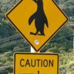 Travel-on-Toast-Reiseblog-Travelblog-Foodblog-Neuseeland-Roadtrip-Pinguin-Warnschild-e1386315585955