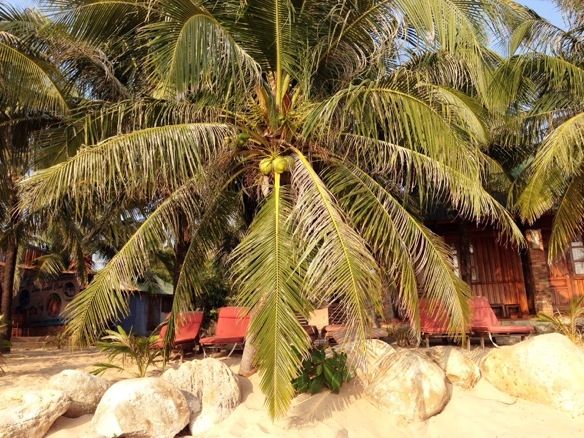 Palme auf Phu Quoc