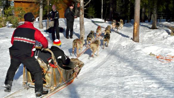 Aufbruch zur Schlittenhunde Tour