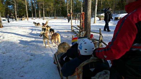 Nokia - Huskytour in Lappland