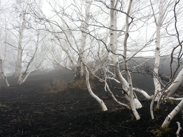 Ätna Tour - Bäume