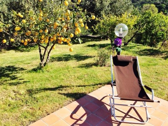 Zitronenbaum beim Casale Romano Resort auf Sizilien
