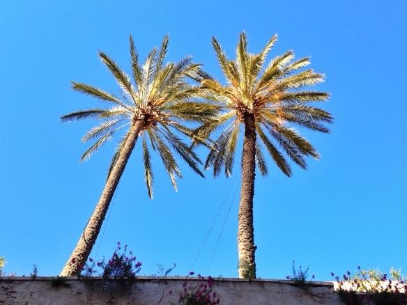 Palmen auf Sizilien