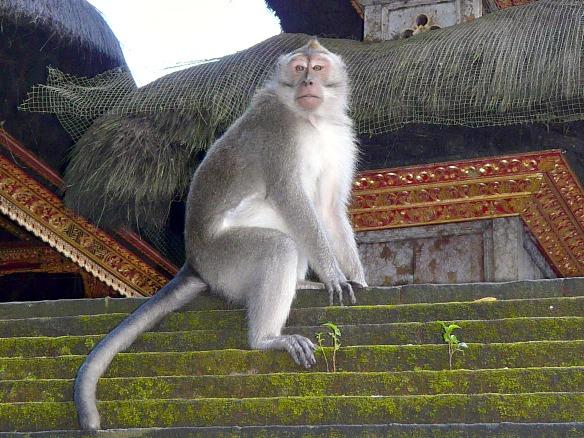 Bali - Affe