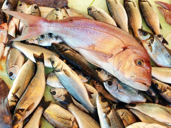 Fisch und danach Cannoli