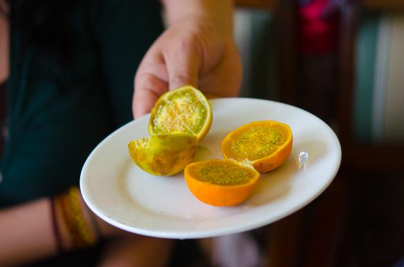 Naranjillas in Ecuador