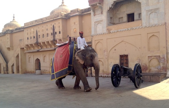 elefant in Rajasthan
