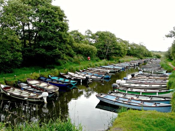 8 Irland - Killarney