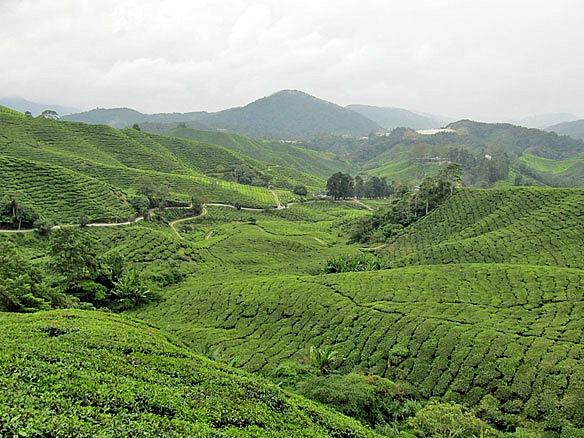 Malaysia Cameron Highlands 2