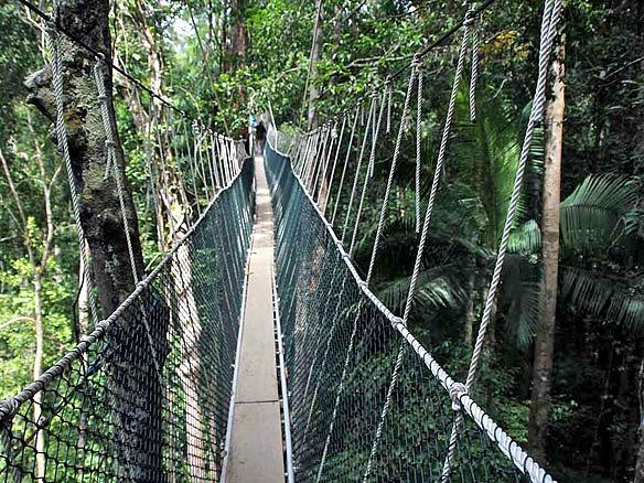 Malaysia Taman Negara Nationalpark 2