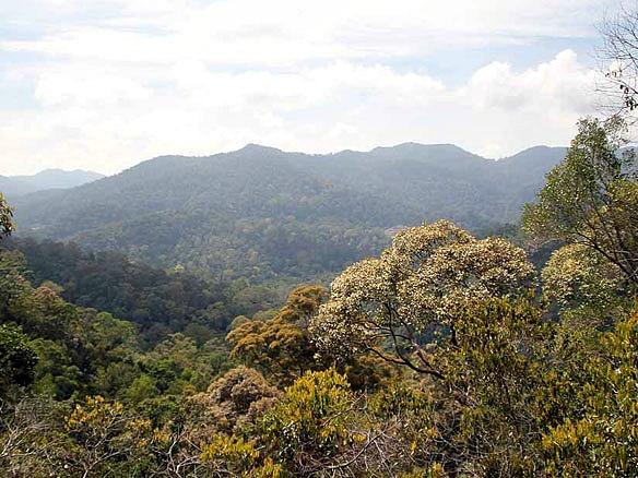 Malaysia Taman Negara Nationalpark 3