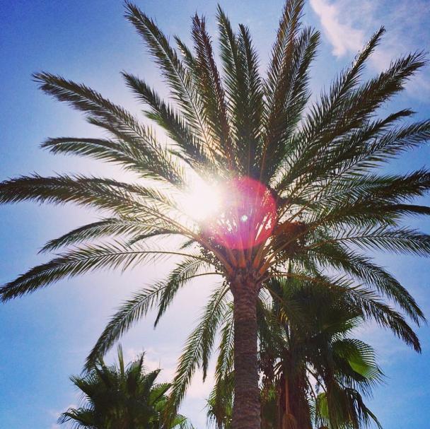 Ibiza - Palme