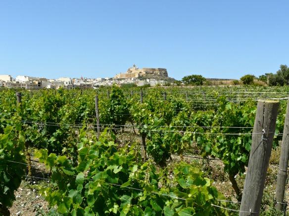 Weinberg in Malta