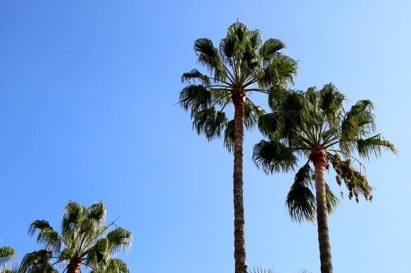 Cannes - Palmen