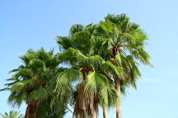 Palmen auf Ibiza