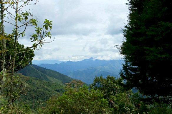 Nebelwald in Ecuador - Yunguilla - Anden