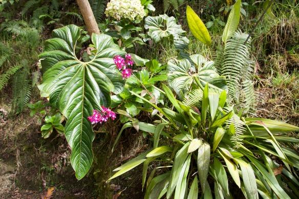 Nebelwald in Ecuador - Yunguilla - Orchidee