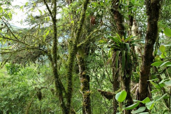 Nebelwald in Ecuador - Yunguilla