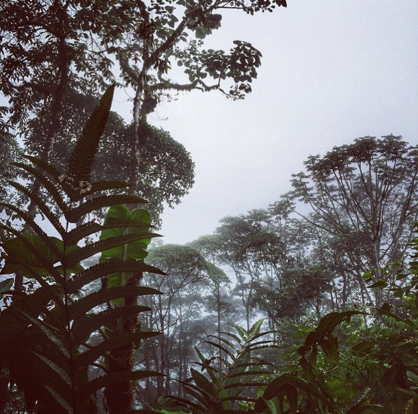 Ecuador - Nebelwald