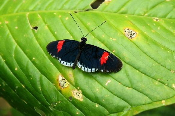 Schmetterling im Dschungel