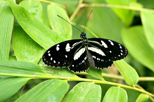 Schmetterling-im-Nebelwald