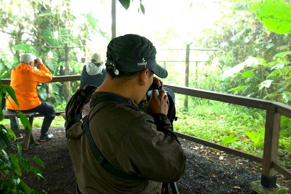 Vogebeobachtung-in-Ecuador