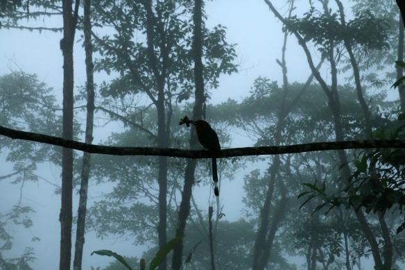 Vogel im Nebelwald