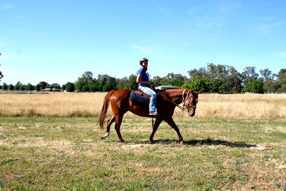 Australien - Pferd