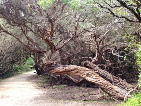 Australien - Wilsons Promontory National Park