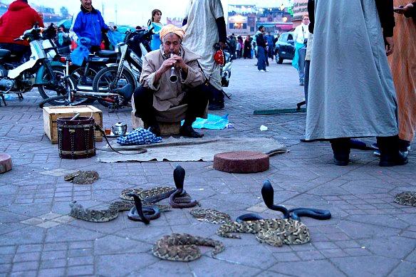 Marrakesch - Schlangenbeschwörer