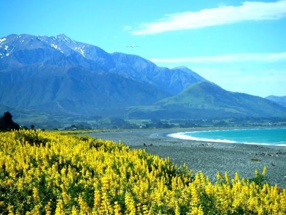 Neuseeland - Kaikoura