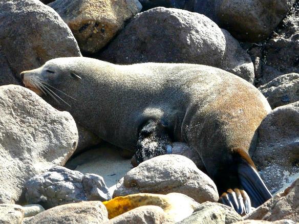 Neuseeland - Otago Halbinsel