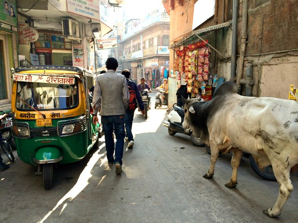 Heilige Kuh in Indien