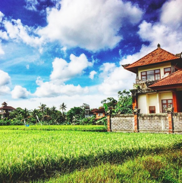 Ubud Bali Indonesien - Reisfelder