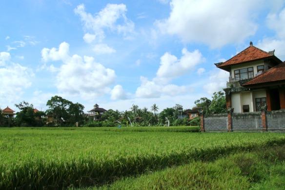 Ubud - Reisfelder