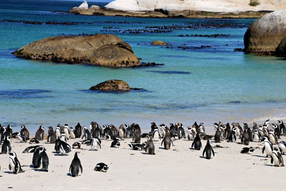 Boulders Beach in Südafrika