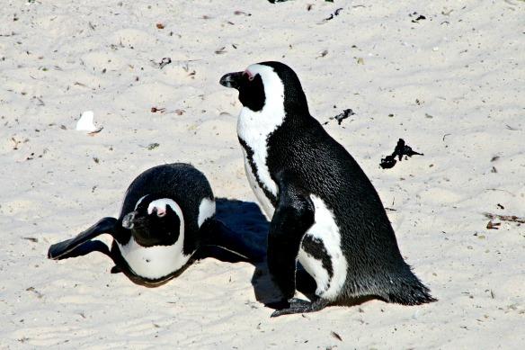 Pinguin Strand Boulders Beach