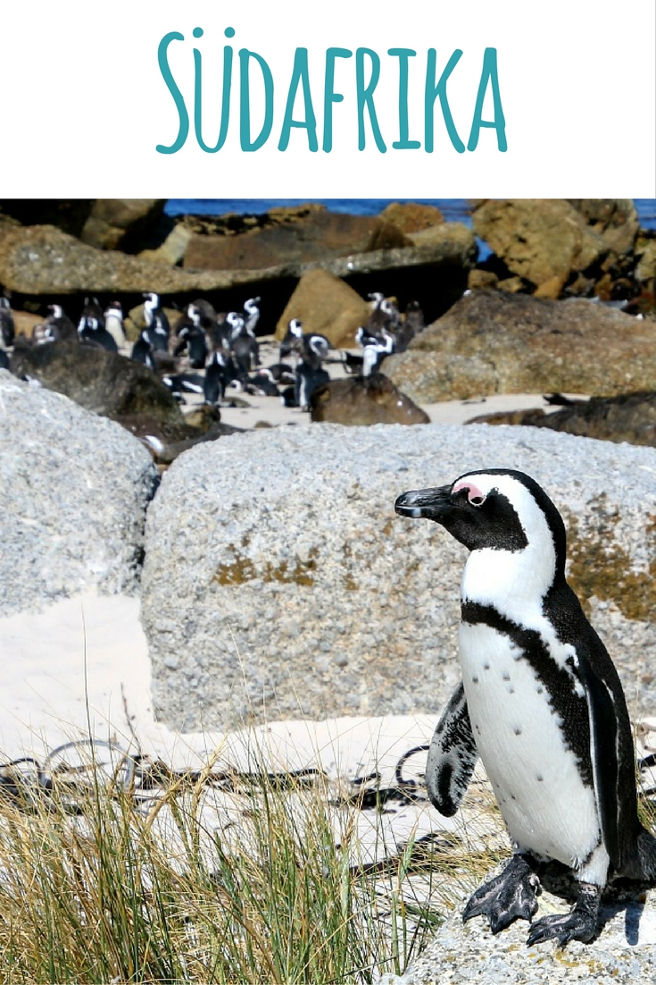 Kapstadt (Südafrika): Ausflug zu den Pinguinen