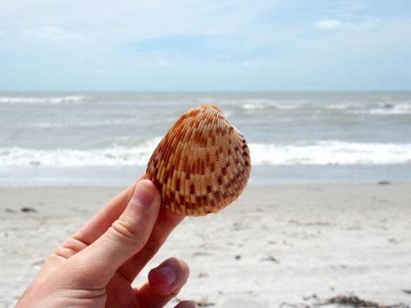 Muschel und Meer