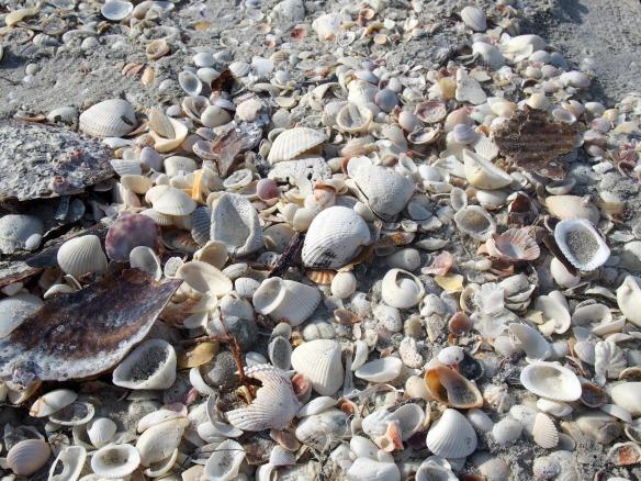 Muschelhaufen auf Sanibel