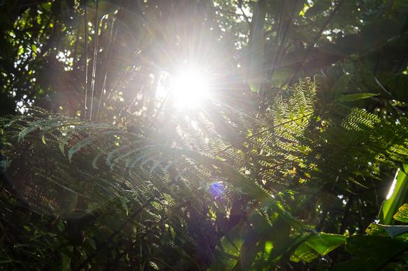 11 Costa Rica Natur