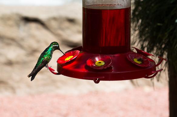 Costa Rica - Kolibri
