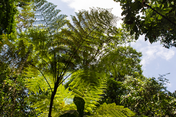 Costa Rica Wald